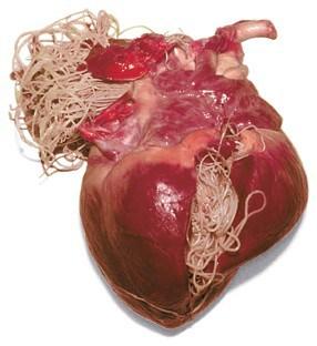 corazon-con-filaraia