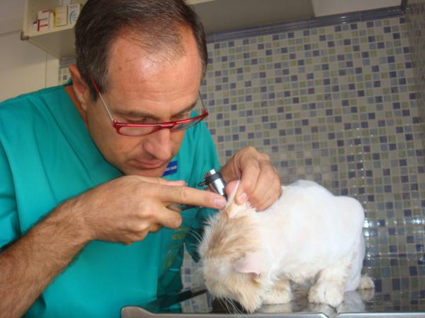 Medicina felina