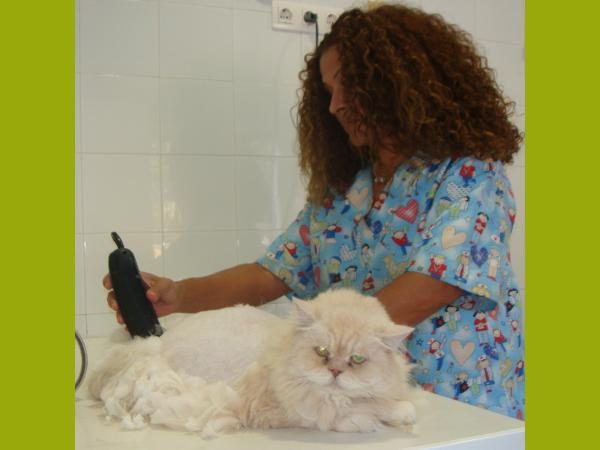 Aplicación de tratamientos cutáneos e higiene capilar preventiva canina y felina.