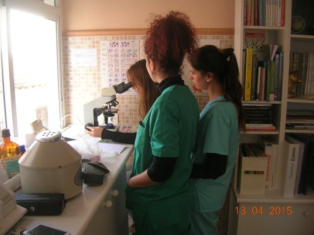 curso auxiliar veterinario – trabajo de laboratorio
